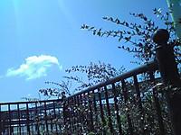 Image291_2